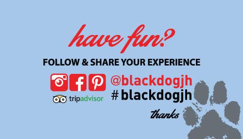 BlackDog_bc_back